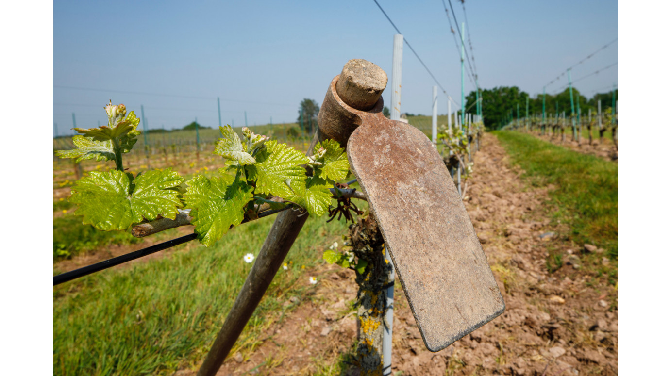 Good pickaxe on the plot of Savennières